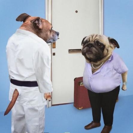 Dog Judo